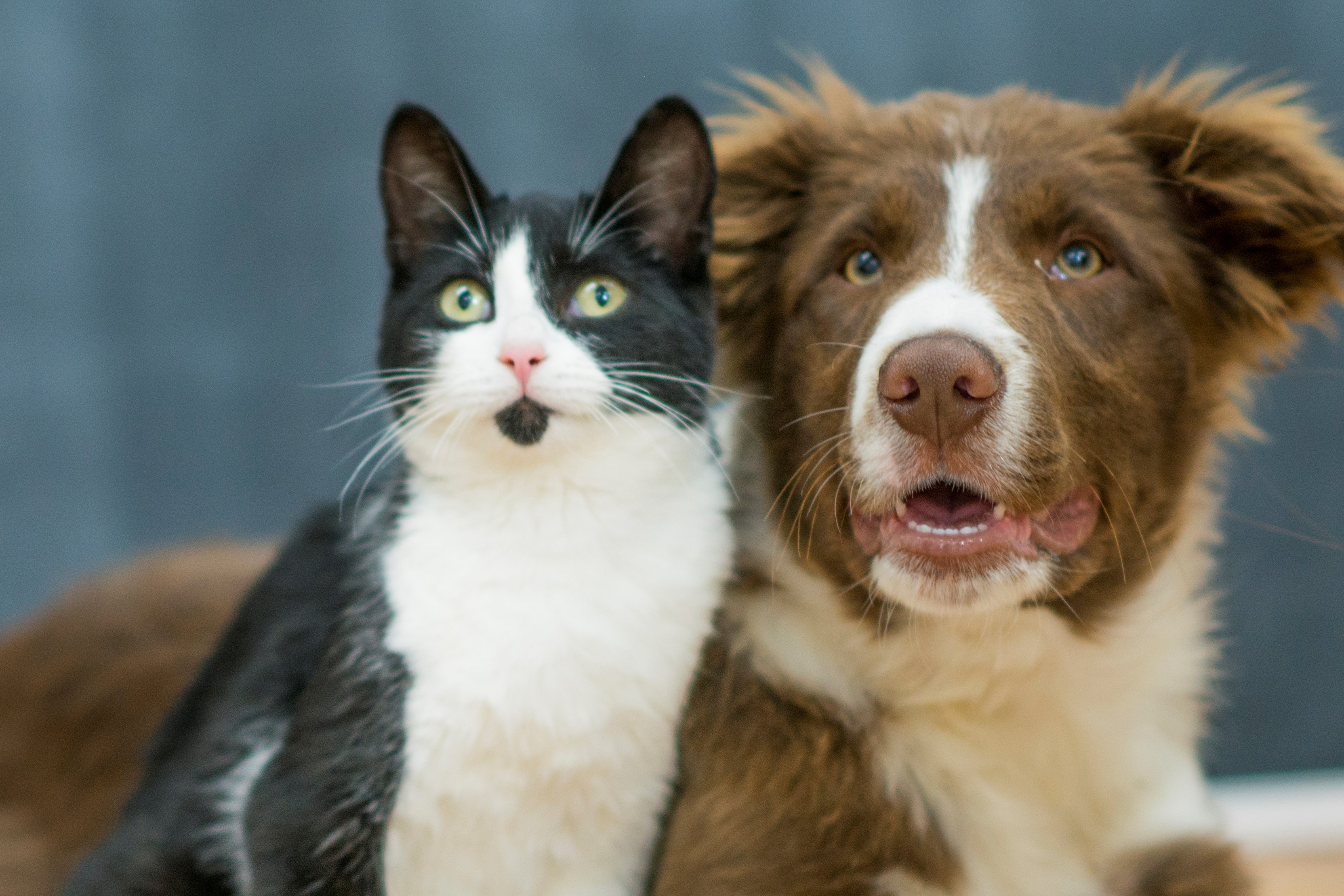 Crypto Innovators' Purr-fect Solutions Could End Animal Cruelty