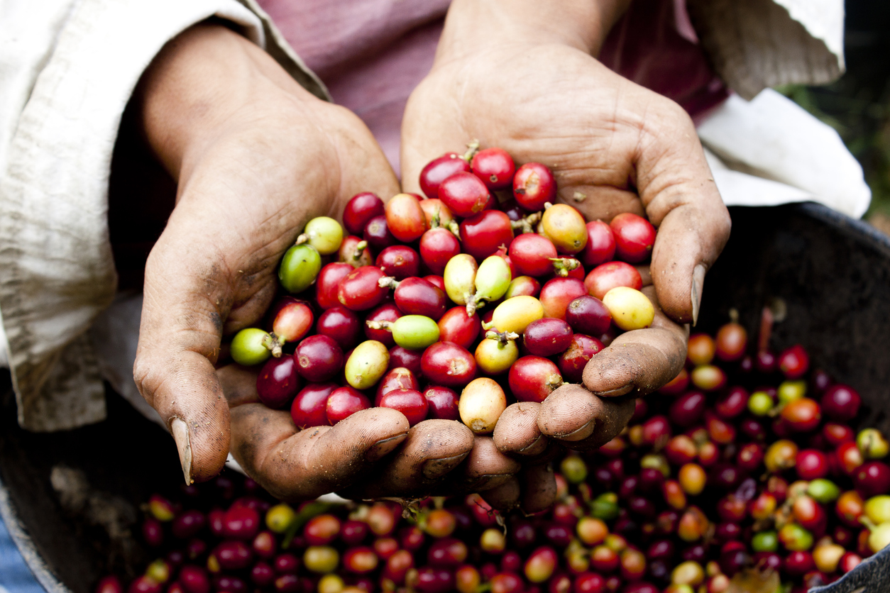 Colombian Coffee Axis Becoming a Cradle of Crypto Pay