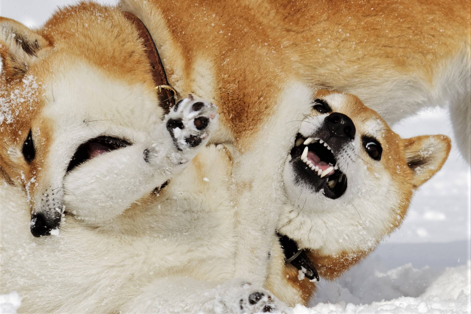 Other Dog (and Cat)-Themed Coins Pump as Shiba Inu and Dogecoin Keep Fighting